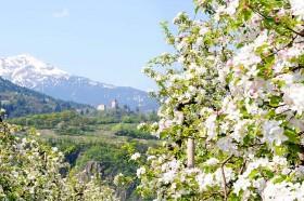 Tolle Frühlingsangebote im Apparthotel Calma für Ihren Urlaub in Südtirol